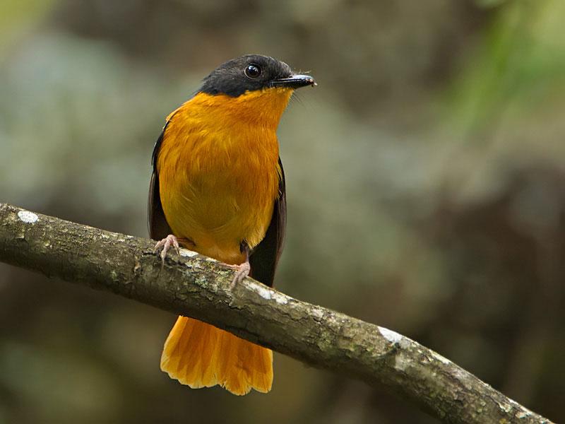 Birding South India